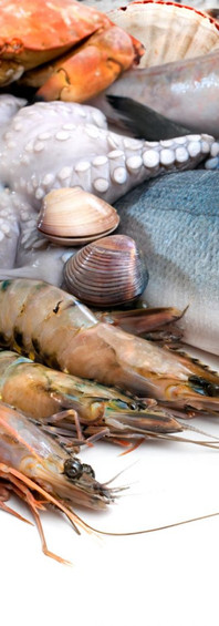 pescado-marisco.jpg