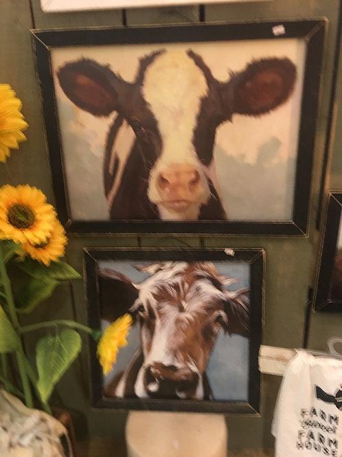 Funny cow pics