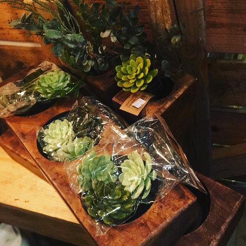 Succulents (lifelike)  3 in each bag/set