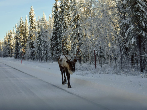 DRIVING BY CAR IN LAPLAND, FINLAND IN EARLY WINTERTIME