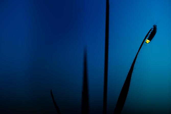 A Ocean Alive organizou e o Nuno Cabrita fotografou
