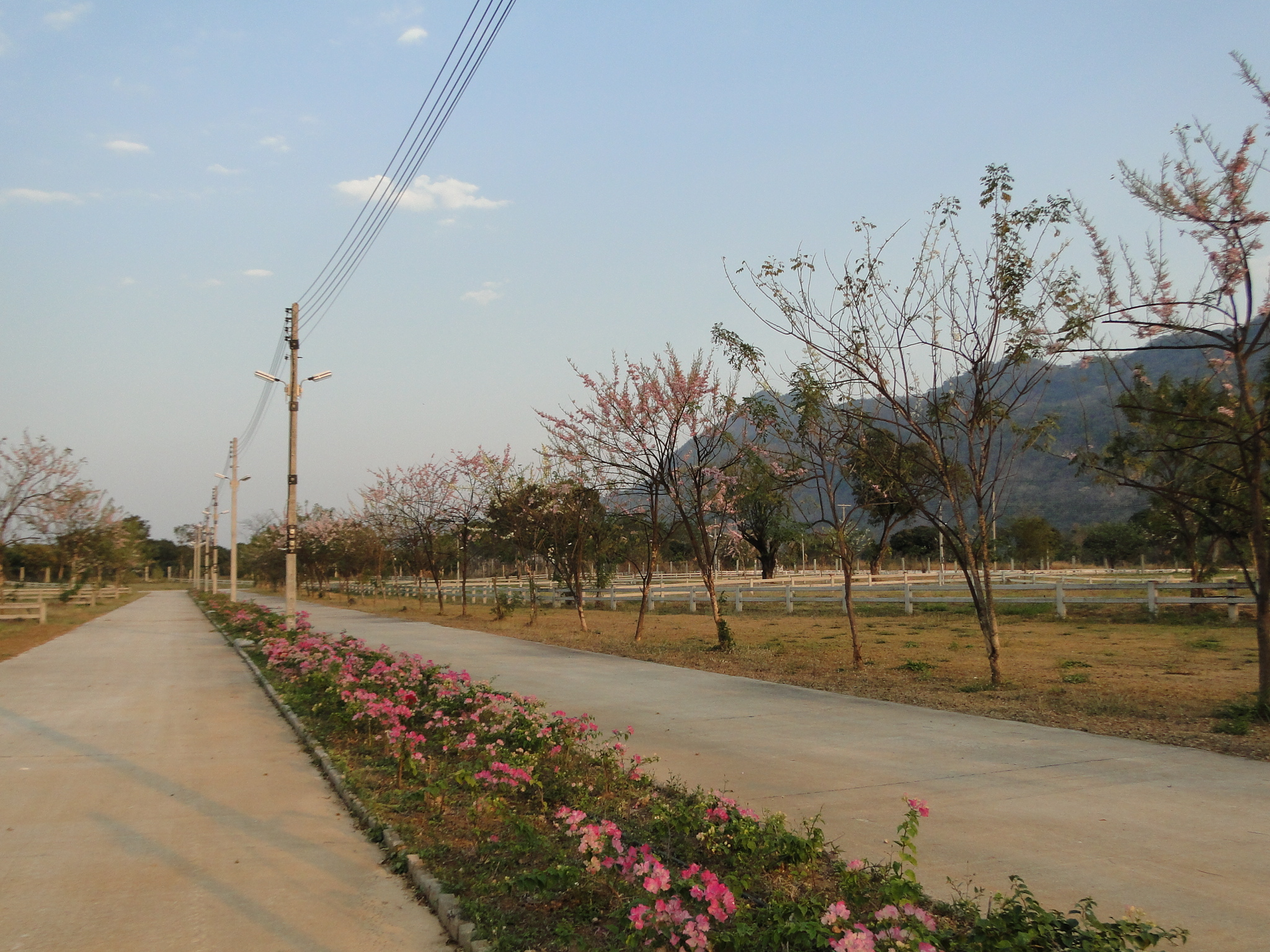 เขตถนนกว้างทั้งโครงการ 12-16 เมตร