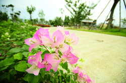 มีดอกไม้บานสะพรั่งทุกฤดูกาล