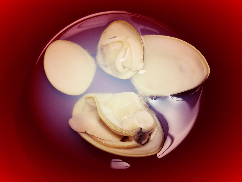 蛤 clam