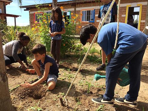 Cultivo - março (2).JPG