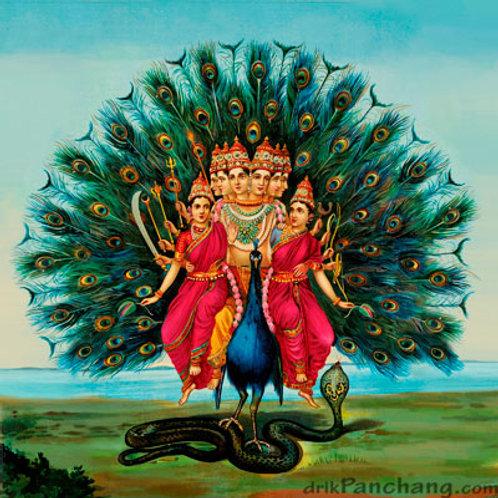 Monthly Shukla Shasthi Puja