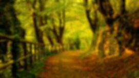 Autumn-Leafy-pathway-trees.jpg