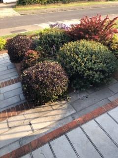 Front Garden After 2.jpeg