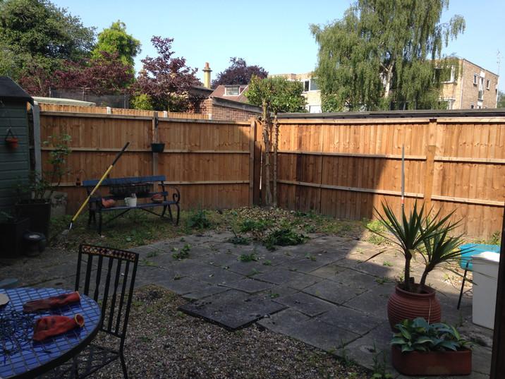 Back Garden During 8.JPG