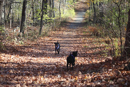 Dog Walking Trail Walk