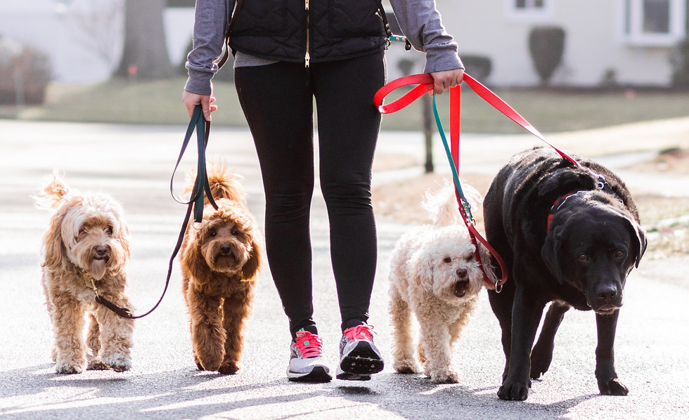Dog Walker With Dogs