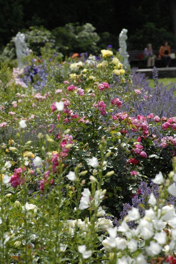 Rosen Lavendel und Glockenblume