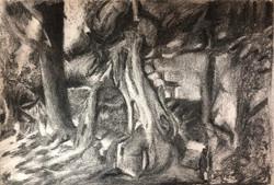 Tree roots, homage to Van Gogh