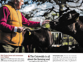 Country Life feature Cotswold Wagyu
