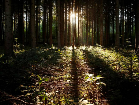 We must look after forests so they look after us