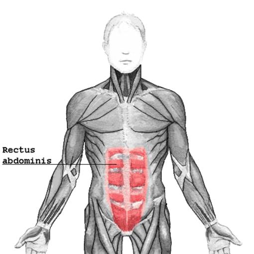 Rectus_abdominis