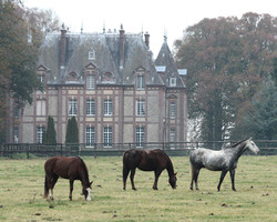 Roseraie du Relais du Château