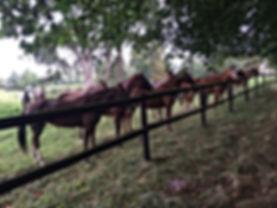 Les poneys de Sébastien Le Page