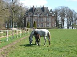 Le Château - Lipizzans