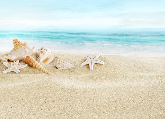Shells on sandy beach.jpg