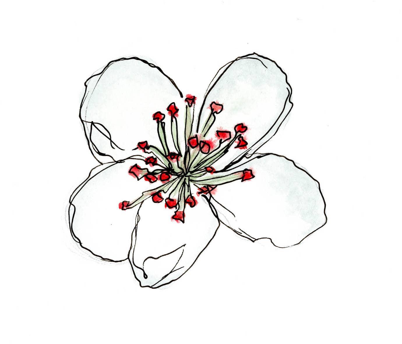 illustration.fleur