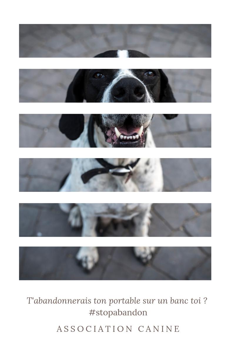 Association canine