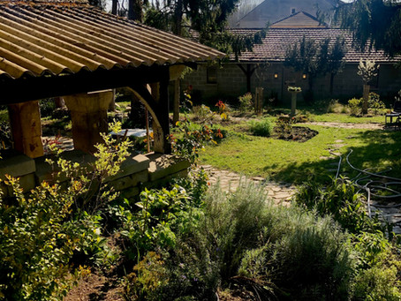 Bienvenue dans mon jardin / Welcome to my Garden  /      Monte Laster