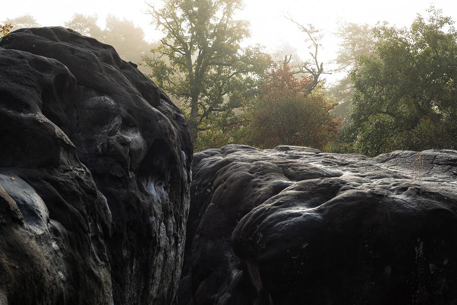 Unbezahlbare herbstliche Morgenstimmung. Blasse gelbgrüne Farben, Nebel und leichter Taufall auf den Blöcken: Perfekt zum Fotografieren - zum Bouldern (noch) nicht so geil.
