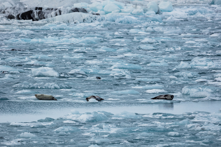 Island Robben: Auch hier gab es wieder spannende Tiere in freier Wildbahn zu beobachten.