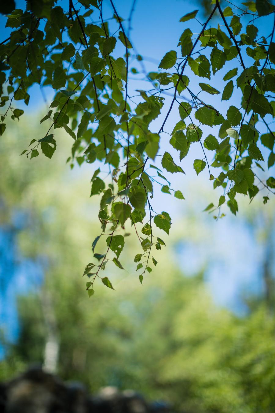 Manchmal reicht es aber auch einfach, die Zeit draußen zu genießen und die Facetten der wundervollen Natur aufzusaugen.