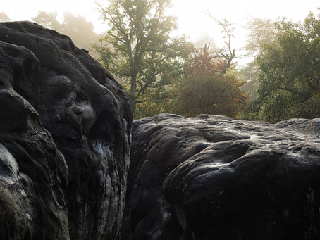 Foto Epos - Fontainebleau