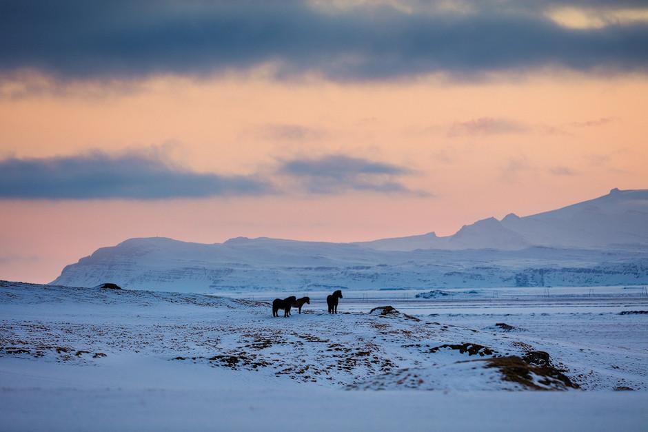 Es scheint fast so, als würden auch die Islandpferde den Sonnenuntergang genießen.