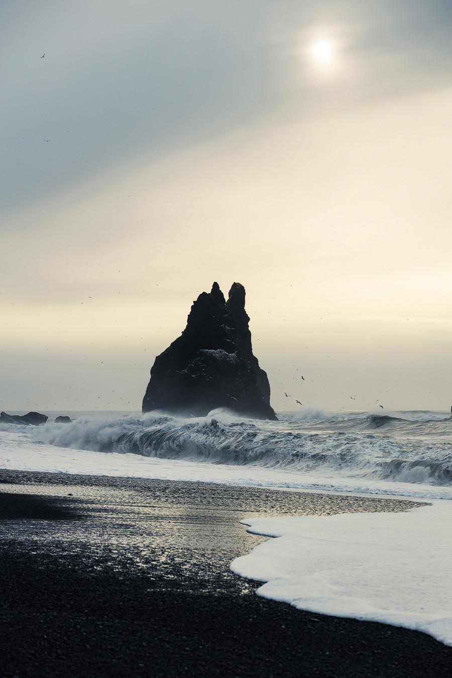 Abertausende Möwen genießen um die Felsen spielend die zarte Morgensonne. Fotostory Island, Strand Vík.