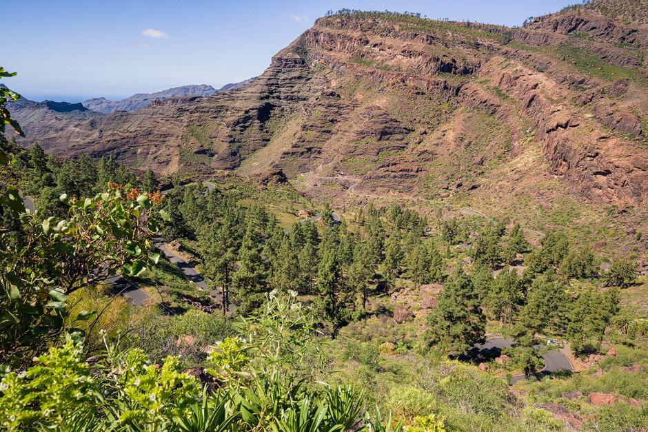 """Das Bouldermekka Gran Canarias in seiner vollen Pracht: Lichte Kiefernwälder und schroffe Felswände im """"Barranco de Mogan""""."""