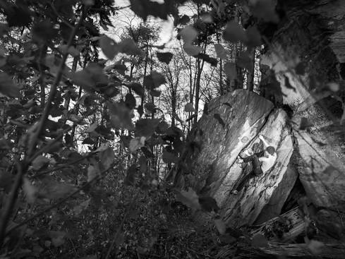 Bouldern in der Pfalz - black and white