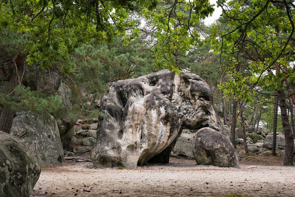 Das Wahrzeichen Fontainebleaus, der Elefant. Die Felsformationen und -strukturen sind zum Teil wirklich bizarr.