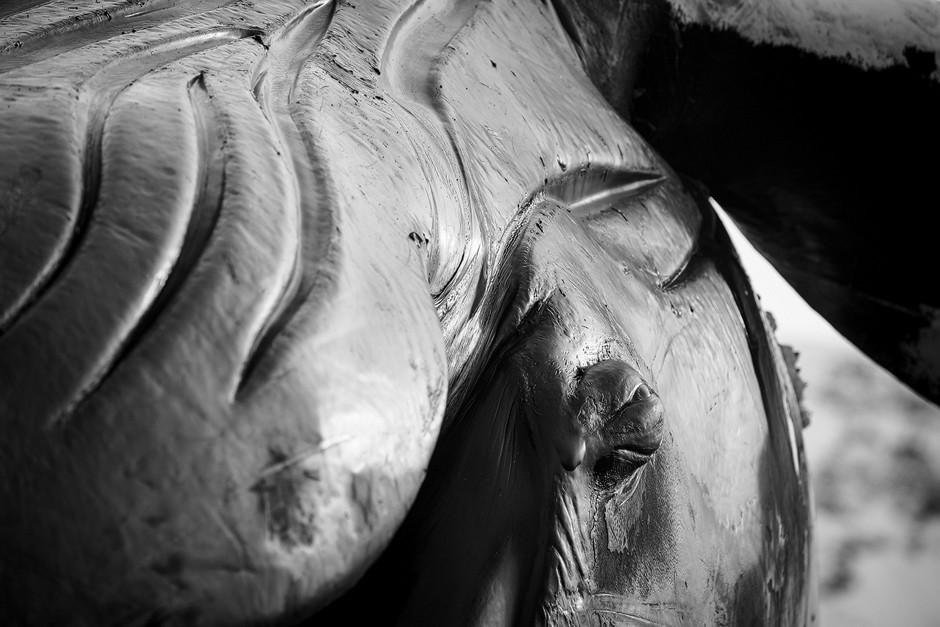 Alles ist gewaltig an so einem wunderschönen Tier. Die stromlinienförmigen Rillen am Bauch geben einem die Vorstellung, wie geschmeidig der Wal durchs Wasser gleitet. Black and White.