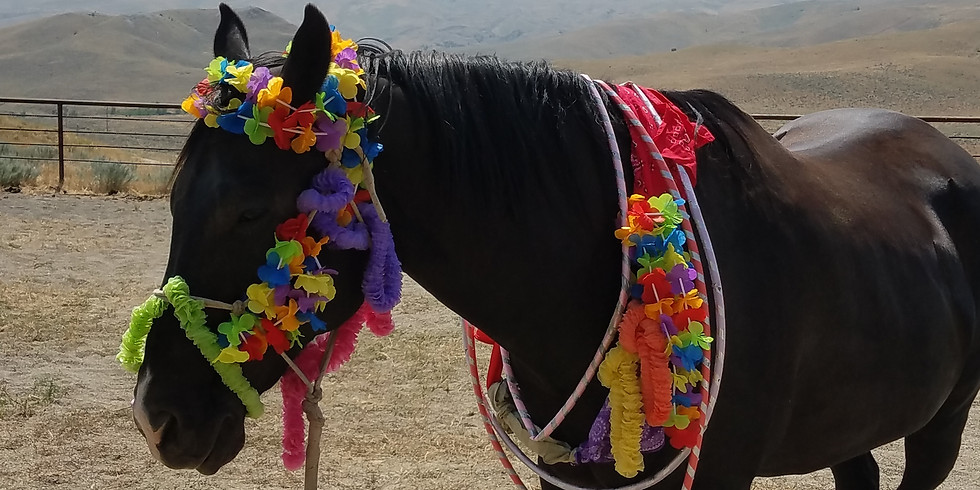 Horse Kids Summer Fun for 9-12 Year Olds!