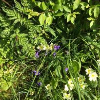 Hedgerow flowers.jpg