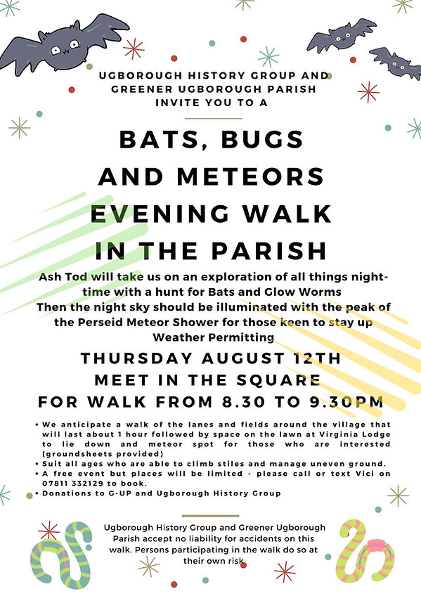 Bats Bugs and Meteors (1).jpg