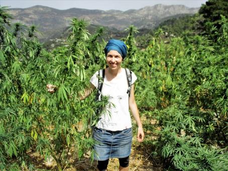 Zelená pro marocké konopí?