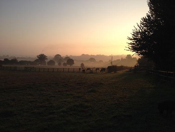 Hill Farm Early Morning.jpg
