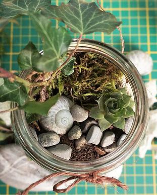 atelier écologique terrarium