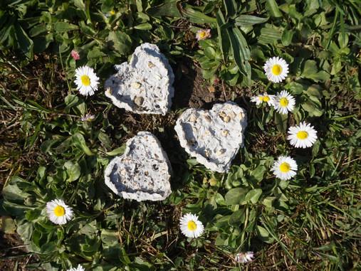 #IDEEDUJOUR Petits cœurs à planter