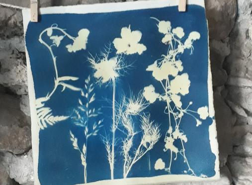 Atelier créatif cyanotype, pour découvrir un procédé photographique ancien.
