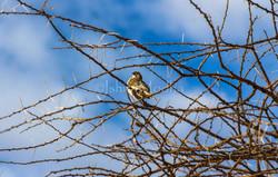Bird - Longido - Tanzania