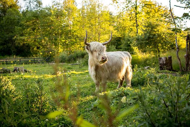 our cows-14.jpg