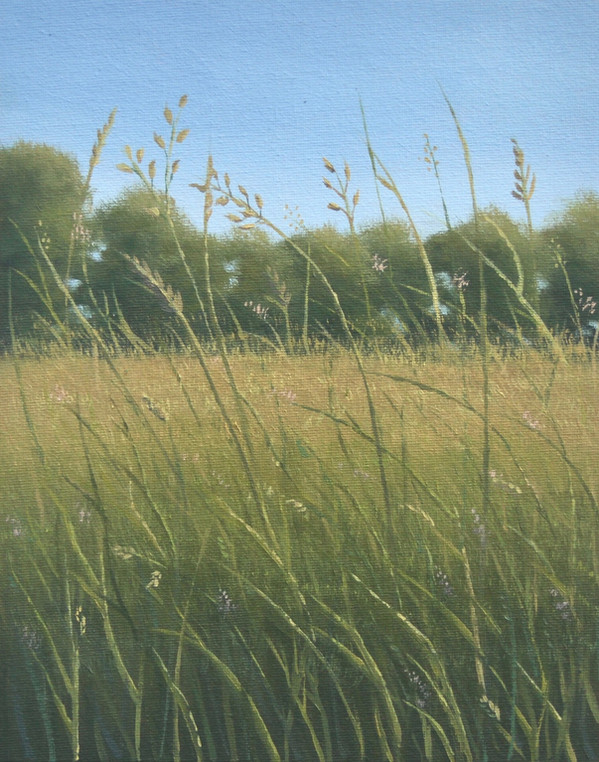 Meadow in Golden Hour