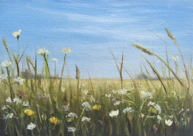 Wildflower Meadow Study