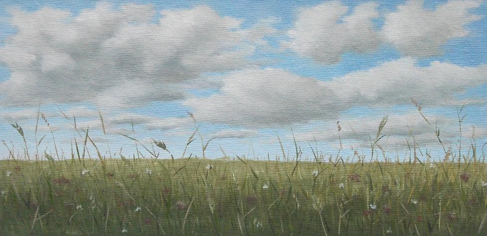 Spring Field Study